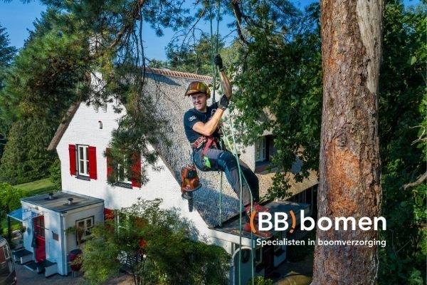 case BB bomen - Catelijne werkt